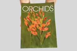 Silver - Scientific & Technical     Orchids, Volume 84, No. 10