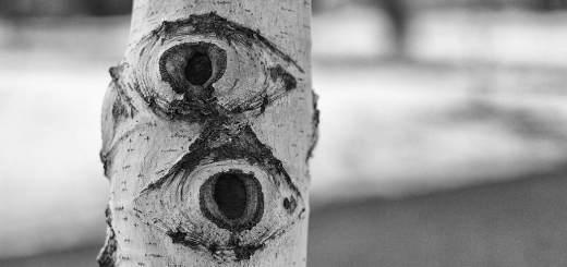 Fate of Unlicensed AMC's in Virginia - All Eyes on VREAB Meeting - Imagecredit Flickr - Alan Levine