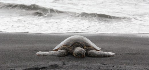 Appraiser Qualification Board Moving Like a Turtle