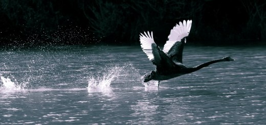 White Swan Predicts that the Next Recession Is Inevitable