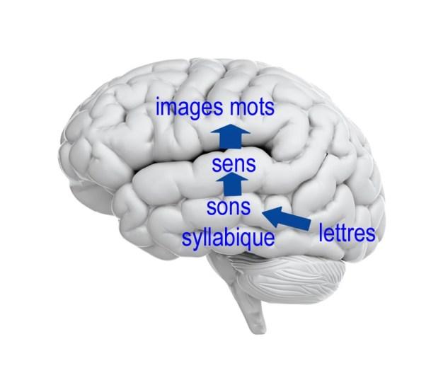 Le côté naturel du langage naturel