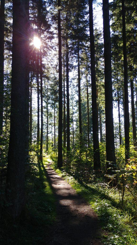 Forêt de Kandel en Allemagne