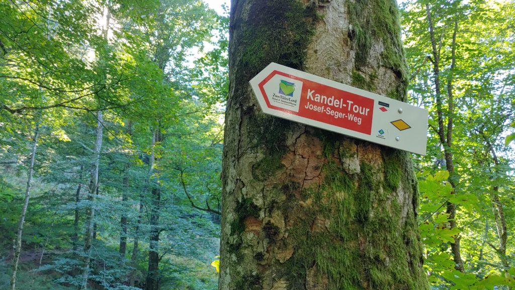Balade en forêt de Kandel en Allemagne