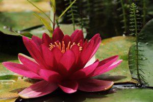 fleur couleur chaude