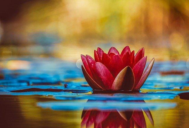 créer une fleur magique