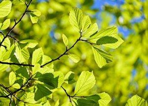 science de la vie arbre