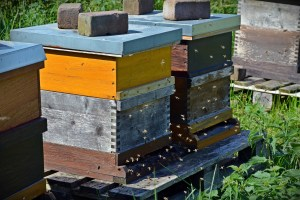 hausse sur une ruche