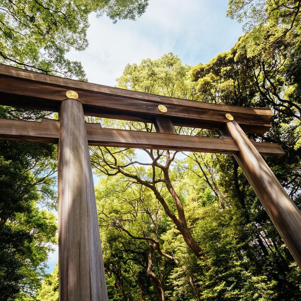 ALR - Meji-jingu Shrine