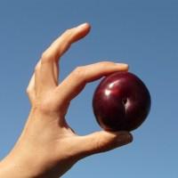 Quels aliments peuvent-ils être mangés avec les doigts ?