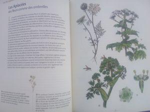 plantes livre enfant