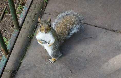 oléagineux : les chouchous des écureuils