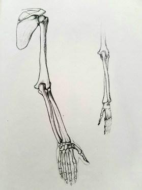 dessiner les mains. anatomie 5