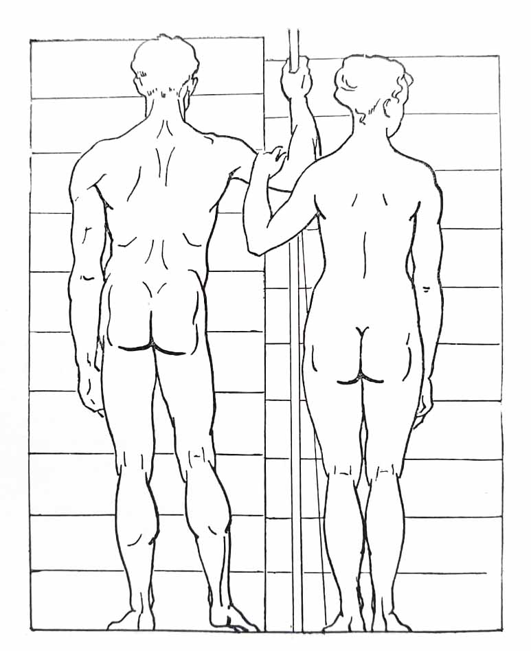 Proportions du corps humain. Le dos.