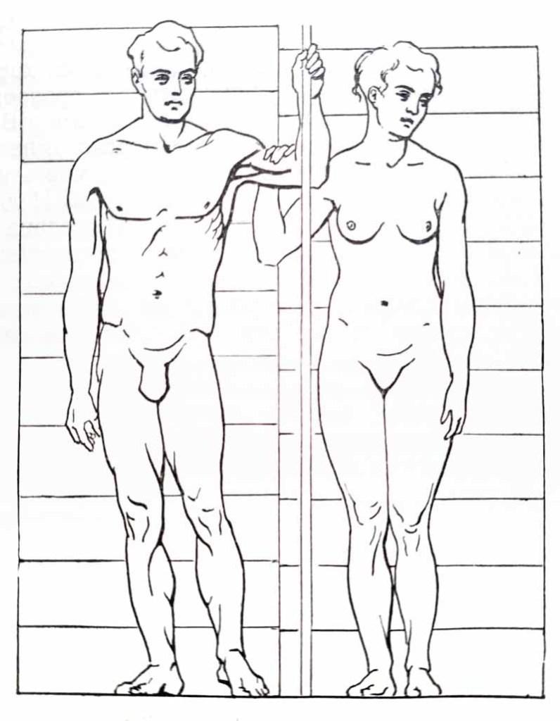 Proportions du corps humain. De face.