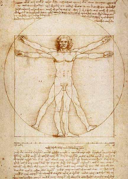 Les proportions du corps humain. l'homme de vitruve.