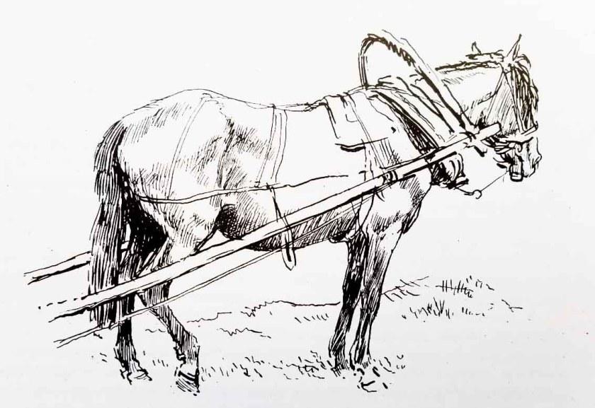 Croquis. Comment dessiner un cheval.