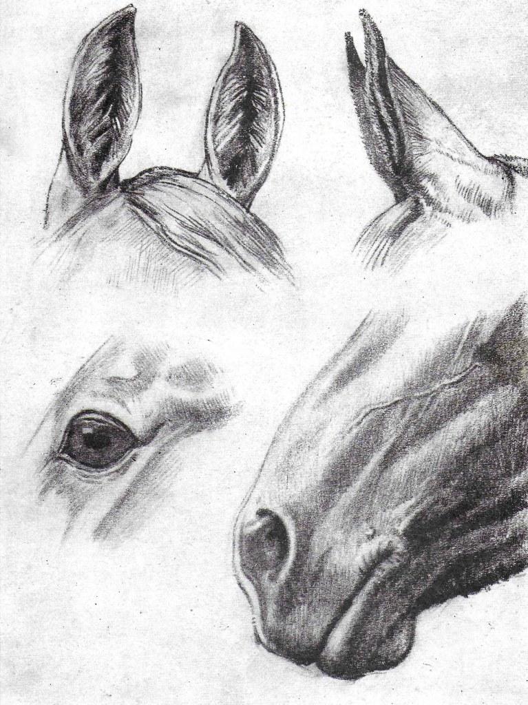 Les oreilles, le nez et l'oeil du cheval. Comment dessiner un cheval