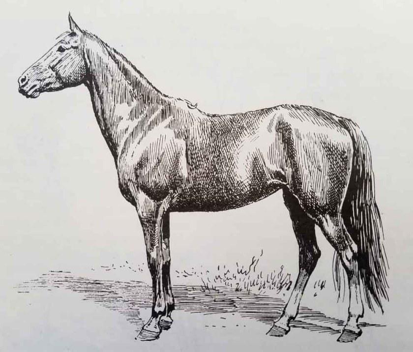 Comment dessiner un cheval. La brillance du poil.
