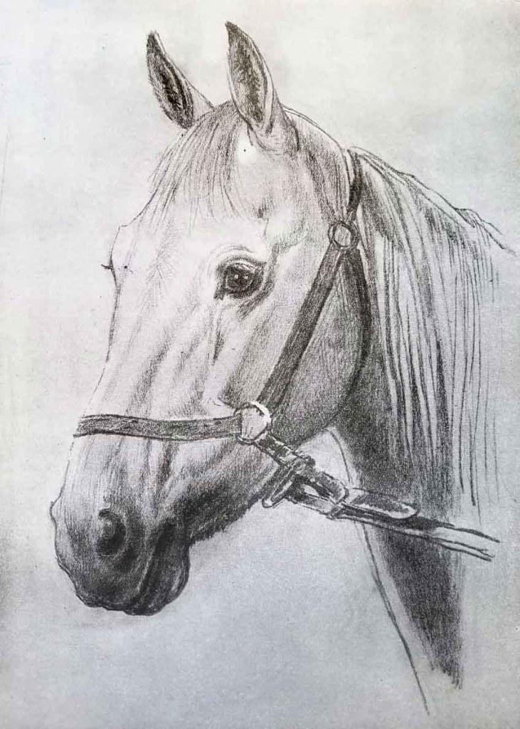 La tête du cheval