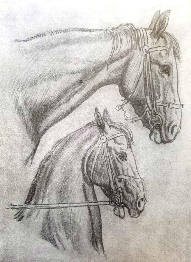 La tête et le cou du cheval. Comment dessiner un cheval