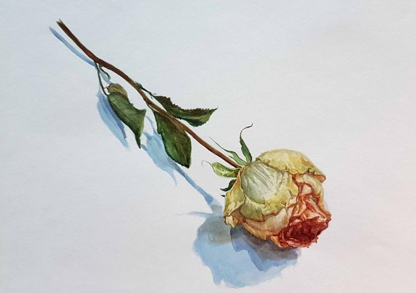 Une rose réalisée avec l'aquarelle White Night