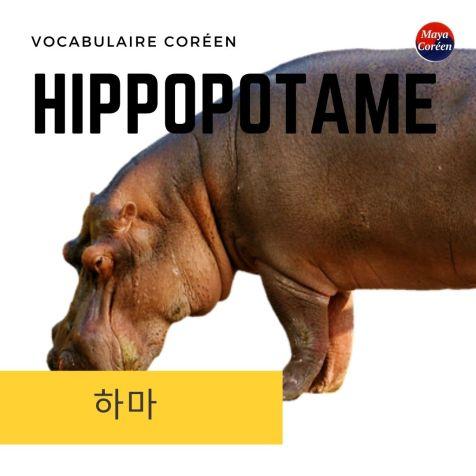 3-hippo