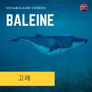 5-baleine