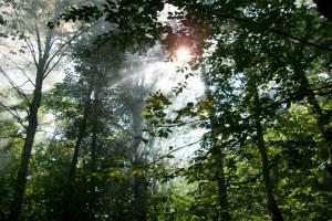 ange-arbres
