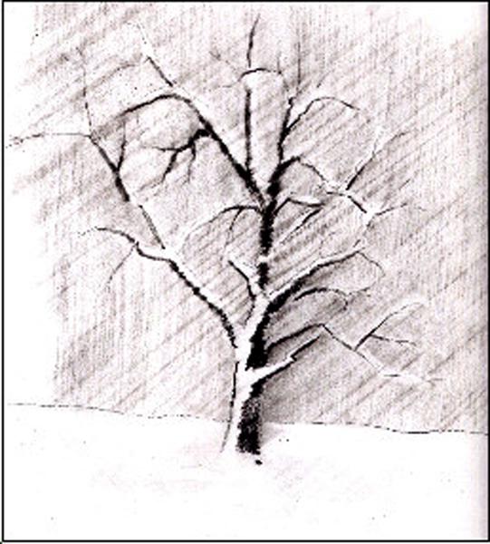 un arbre sous la neige.CWK