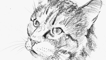 Comment Dessiner Un Chat Apprenez A Dessiner Com