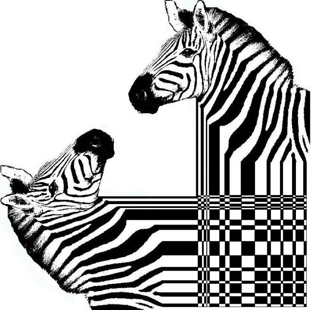 Le dessin op 39 art vous connaissez apprenez a - Zebre a dessiner ...