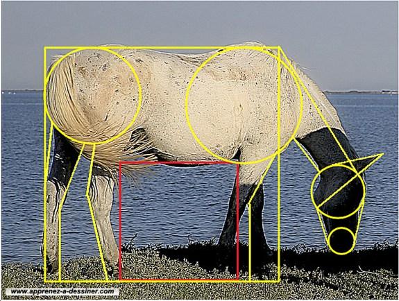 Comment dessiner un cheval part 1 apprenez a - Dessiner cheval ...