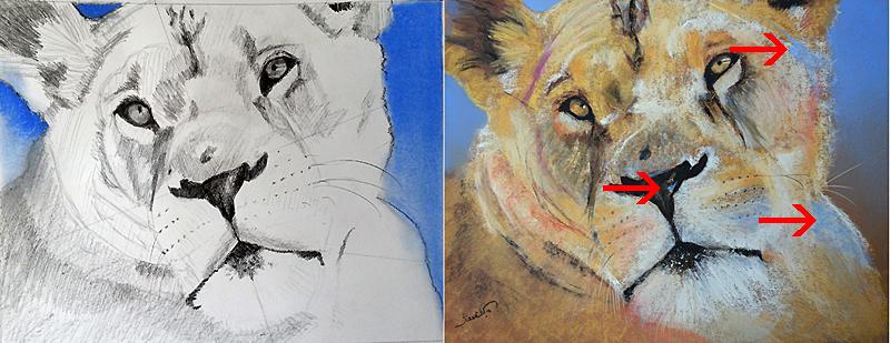 l inverse de cougar