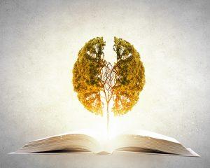 lecture cerveau arbre 300x240 - Lecture(s) et mémoire(s) : Senior moments !