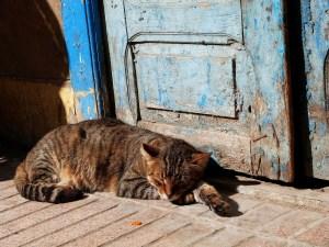 cat 1865263 1920 - cat-1865263_1920