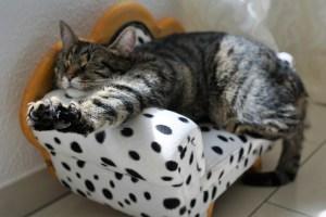 cat 2360863 1920 - cat-2360863_1920