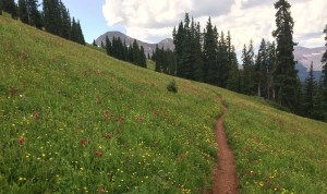 Trail in wildflowers