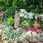 Shade Gardening Takes Planning Lsu Agcenter