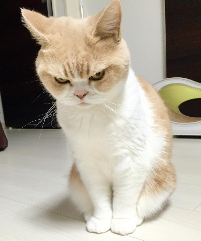 Come scoprire se il tuo gatto sta tentando di ucciderti