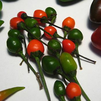 salsa chiltepe