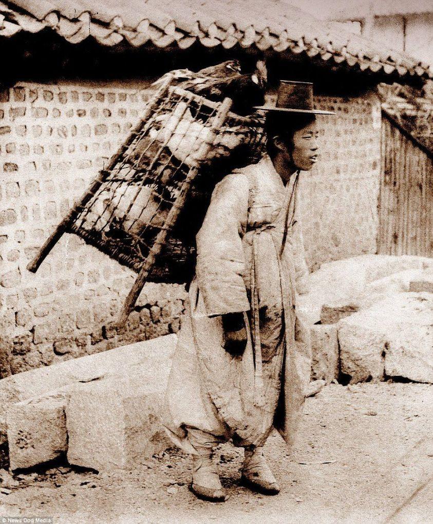 vendedor pollo seul 1900