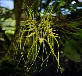 Orquídeas, La Amazonía, Forestales, Flores, Naturaleza