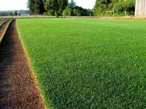 Como plantar grama Bermuda Tifway 419