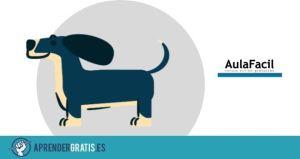 Aprender Gratis | Curso de cuidado de cachorros