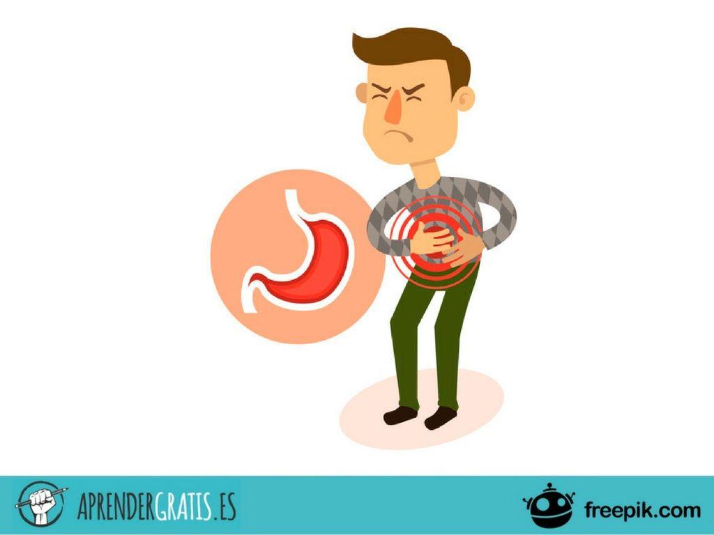 Curso sobre el sistema gastrointestinal, reproductivo y endocrino