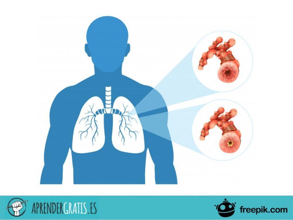 Aprender Gratis | Curso sobre la fisiología respiratoria humana