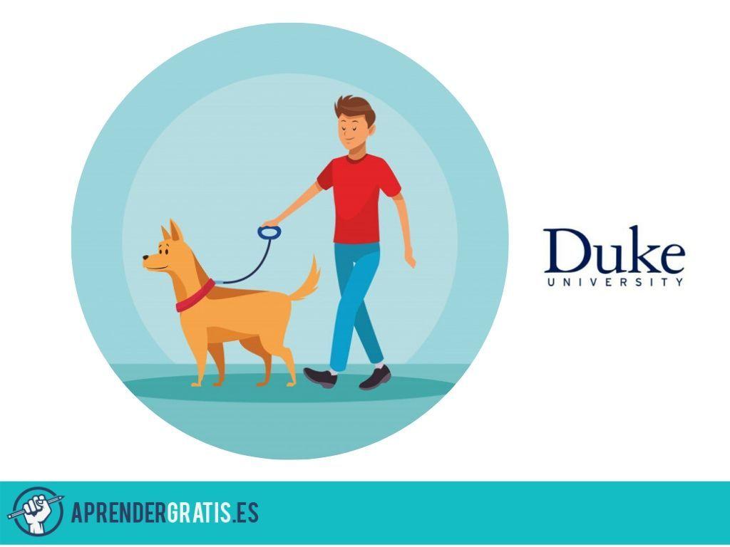 Aprender Gratis | Curso sobre psicología canina: emociones y cognición de perros