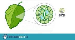 Aprender Gratis | Curso sobre fotosíntesis