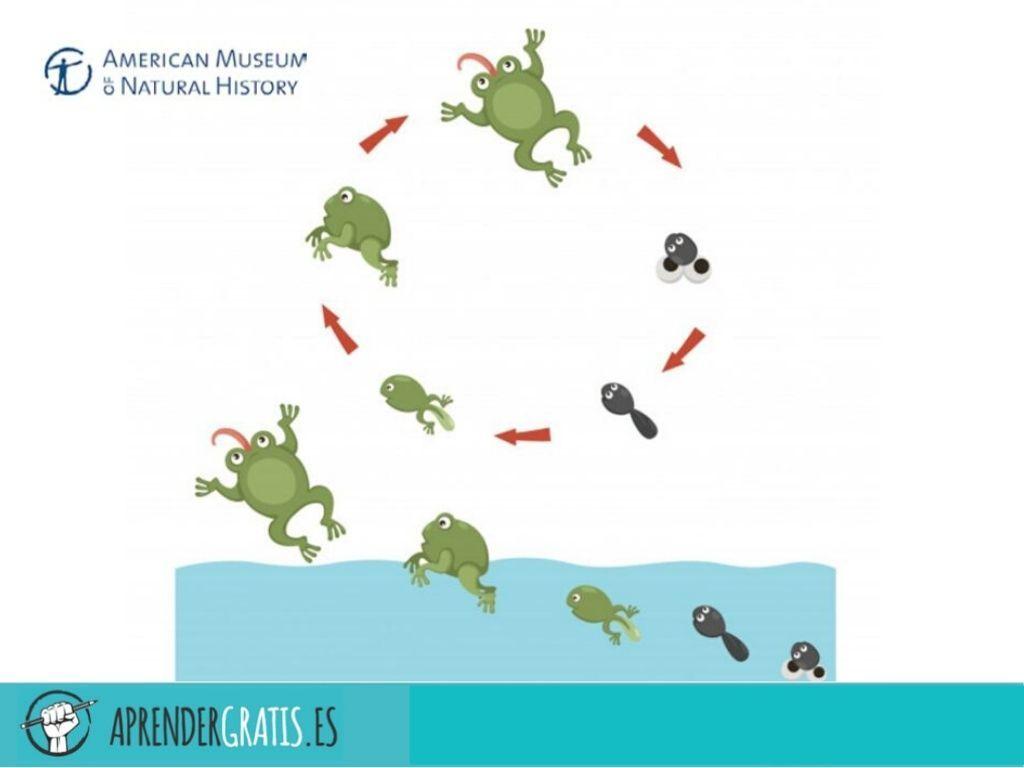 Aprender Gratis | Curso sobre la evolución (docentes)