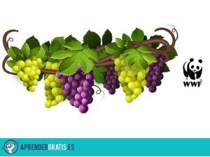 Aprender Gratis | Manual de buenas prácticas en viticultura